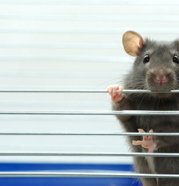 """Despite all my Rage, I'm still just a Rat in a Cage"""